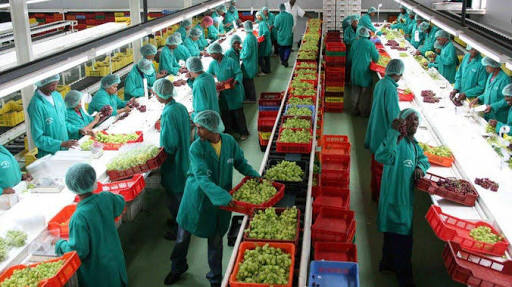 South Africa Agro-Processing Companies Set to Showcase Products in Iran. -  Mega Icon Magazine